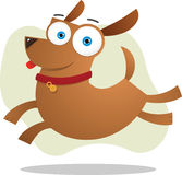 Brown dog jumping Royalty Free Stock Images