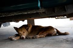 Brown dog lying under the car stock photos