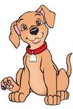 Brown dog with name tag Royalty Free Stock Image