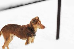 Brown dog outdoors in winter royalty free stock photos