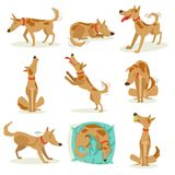 Brown Dog Set Of Normal Activities. Brown Dog Set Of Normal Day-to-Day Activities. Set Of Classic Pet Dog Behavior Illustrations In Cute Carton Style Isolated On Royalty Free Stock Image