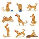 Brown Dog Set Of Normal Everyday Activities Stock Images