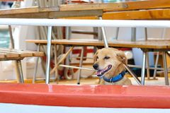 Brown dog on ship Royalty Free Stock Photo