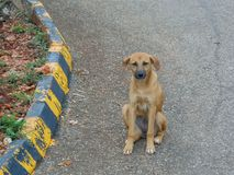 Brown Dog Sitting by the Curve stock photography