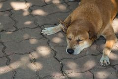 Brown dog sleeo on the staircase. Brown dog sleep on the staircase under the tree Stock Photo