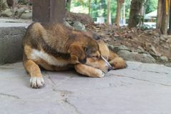 Brown dog sleep on the staircase. The brown dog sleep alone on staircase under sunlight Royalty Free Stock Images
