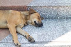 Brown dog sleep on the staircase. The brown dog sleep alone on staircase under sunlight Stock Images