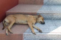 Brown dog sleep on the staircase. The brown dog sleep alone on staircase under sunlight Stock Image