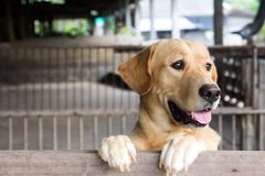 Brown dog stood and wait over the cage. Brown dog stood and wait over cage Stock Image