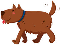 Brown dog wagging its tail Stock Image