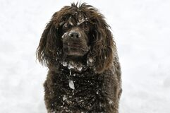 Brown Dog Waiting in the White Snow