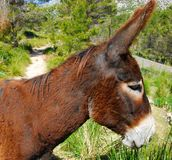 Brown donkey Stock Images