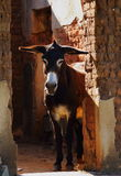 A brown donkey in a doorway. A small brown donkey stands back lit in the doorway of an old dilapidated abandoned house portrait format Royalty Free Stock Photo