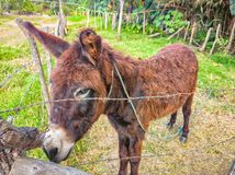 A brown donkey in Guerrero. Travel in Mexico stock photo