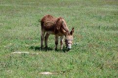 Brown donkey - horizontal Royalty Free Stock Photography