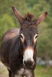 Brown donkey. Sad donkey, tired donkey stock photos