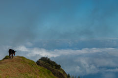 Brown Donkey standing on mountain above the clouds Royalty Free Stock Photography