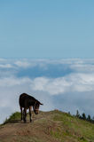 Brown Donkey standing on mountain above the clouds Stock Image