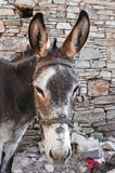 Brown donkey Royalty Free Stock Photos