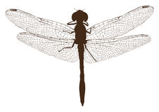 Brown dragonfly silhouette top view Stock Photography