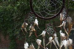 Brown dream catcher with green trees. As background Royalty Free Stock Photos