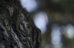 Brown drewniana bela z abstrakcjonistyczną szorstką teksturą plamy zieleni bokeh tło, natury środowisko i eco życzliwy przeciw ko Obraz Royalty Free