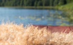 Brown drewniane deski z begie psem owłosionym przeciw niebieskiemu niebu, woda, zieleni płochy i las i fotografia stock
