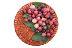 Brown drewniany koszykowy pełny soczyści barwiący agresty z świeżymi zielonymi liśćmi, odosobniony na białym tle Obraz Royalty Free