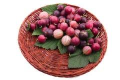 Brown drewniany koszykowy pełny wyśmienicie barwiący agresty z pięknymi zielonymi liśćmi, odosobniony na białym tle obrazy royalty free