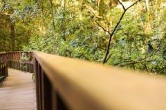 Brown drewniany most po środku zieleni mos I lasu fotografia stock