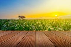 Brown drewniany taras na polu uprawnym i rolnik budzie w rolniczym ogródzie Fotografia Royalty Free