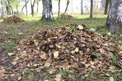 Brown dried leaf texture seasonal.Pile of fallen leaves.Dried leaf background . Brown dried leaf texture seasonal.Pile of fallen leaves.Dried leaf background Stock Images