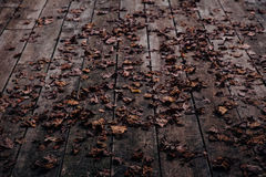 Brown Dried Leaf on Top of Black Wooden Floor Stock Images