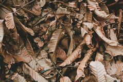 Brown Dried Leaves Royalty Free Stock Photos