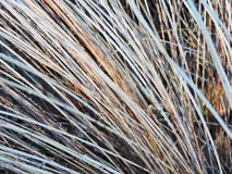 Brown dry autumn grass Royalty Free Stock Photography