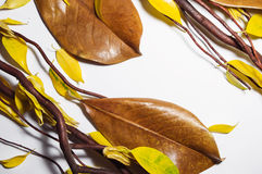 Brown dry branches, brown magnolia leaves and yellow autumn leav stock photography