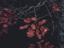 Brown Dry Leaf Stock Image