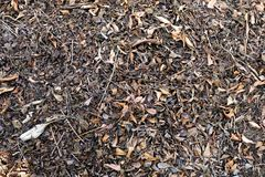 Brown Dry Leaf. Dry Leaves on Brown Soil in Autumn Forest Background. Great for Any Use Royalty Free Stock Image