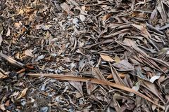 Brown dry leaf. Dry leaves on brown soil in autumn forest background. Great for Any Use Royalty Free Stock Photo
