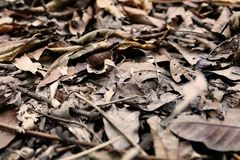 Brown Dry Leaf. Dry Leaves on Brown Soil in Autumn Forest Background. Great for Any Use Stock Images