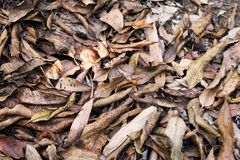Brown Dry Leaf. Dry Leaves on Brown Soil in Autumn Forest Background. Great for Any Use Stock Photography