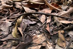 Brown Dry Leaf. Dry Leaves on Brown Soil in Autumn Forest Background. Great for Any Use Royalty Free Stock Photography