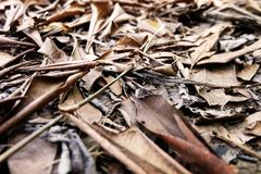 Brown Dry Leaf. Dry Leaves on Brown Soil in Autumn Forest Background. Great for Any Use Stock Image