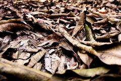 Brown Dry Leaf. Dry Leaves on Brown Soil in Autumn Forest Background. Great for Any Use Stock Photo