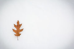 Brown dry leaf lying on snow background Royalty Free Stock Photography