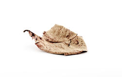 Brown dry leaf on a white background with shadow Stock Image