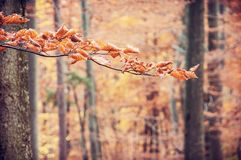 Brown dry leaves on the autumn tree, red filter Royalty Free Stock Photos
