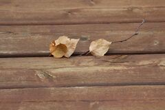 Brown Dry Leaves on Brown Wooden Plank Royalty Free Stock Photo