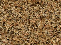 Brown dry pine needles background Stock Photography