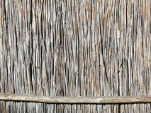 Brown dry reed plant fence Stock Image
